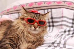 Gato em vidros vermelhos e no chapéu vermelho Imagens de Stock Royalty Free