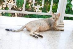 Gato embarazada Fotos de archivo