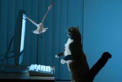 Gato emocionado del utilizador del ordenador Imagen de archivo