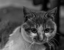 Gato emocional Fotos de archivo libres de regalías