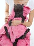 Gato empapado cinzento bonito após um gato empapado do preto do bathCute após um bastão Imagem de Stock Royalty Free