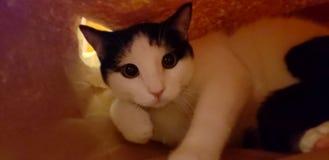 Gato empaquetado imagen de archivo libre de regalías