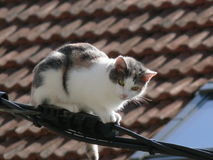Gato empoleirado Imagens de Stock