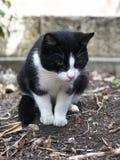 Gato empoleirado abaixo de aspirar a terra Fotos de Stock Royalty Free