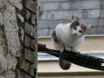 Gato empoleirado em um fio bonde Foto de Stock