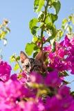 Gato en árbol Imagen de archivo libre de regalías