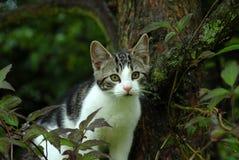 Gato en árbol Imagenes de archivo