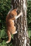 Gato en árbol Fotos de archivo