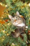 Gato en árbol de navidad Imagenes de archivo