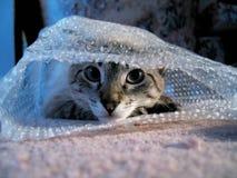 Gato en abrigo de burbuja Imágenes de archivo libres de regalías