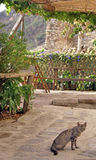 Gato en agriturismo Foto de archivo libre de regalías
