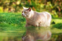 Gato en agua en el césped Imagenes de archivo