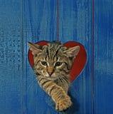 Gato en agujero del corazón Imagen de archivo