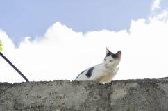 Gato en alto debajo del cielo fotos de archivo
