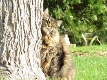 Gato en animal del campo de hierba Imagenes de archivo