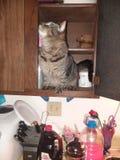 Gato en armario imagen de archivo