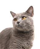 Gato en blanco Fotos de archivo