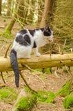 Gato en bosque Foto de archivo
