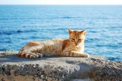 Gato en Cádiz Foto de archivo libre de regalías