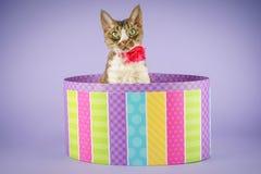 Gato en caja colorida Imágenes de archivo libres de regalías