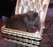 Gato en caja de costura fotos de archivo