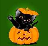 Gato en calabaza stock de ilustración