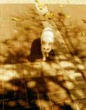 Gato en calle fotografía de archivo libre de regalías