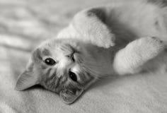 Gato en cama Fotos de archivo