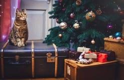 Gato en casa que se sienta en un fondo hermoso de la Navidad de la maleta con un daccor del Año Nuevo, presentes y cajas viejas d Fotos de archivo libres de regalías
