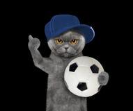 Gato en casquillo con una bola Fotografía de archivo libre de regalías
