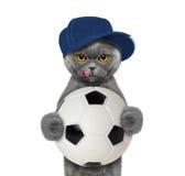 Gato en casquillo con una bola Imagenes de archivo