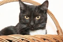 Gato en cesta Imagenes de archivo
