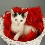 Gato en cesta Fotos de archivo