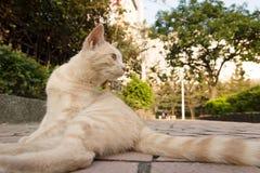 Gato en ciudad Foto de archivo libre de regalías
