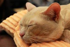 Gato en coma Foto de archivo