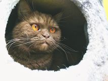 Gato en crabpole foto de archivo