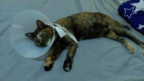 Gato en cuello Fotos de archivo