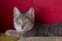 Gato en Dahab foto de archivo