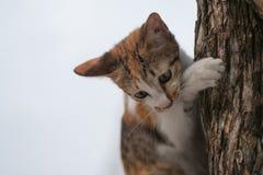 Gato en el árbol imagen de archivo libre de regalías