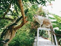 Gato en el árbol Fotografía de archivo libre de regalías