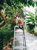 Gato en el árbol Fotografía de archivo