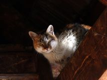 Gato en el ático Foto de archivo libre de regalías