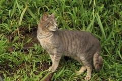 Gato en el arbusto fotografía de archivo libre de regalías