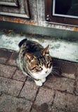 gato en el asakusa Japón del humor @ fotografía de archivo