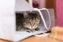 Gato en el bolso blanco fotografía de archivo