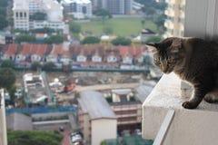 Gato en el borde de un balcón Imagenes de archivo