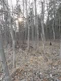 Gato en el bosque Imagen de archivo