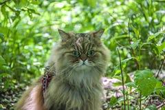 Gato en el bosque Imagen de archivo libre de regalías