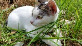 Gato en el campo Fotografía de archivo