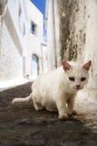 Gato en el cerco blanco en una isla griega Imágenes de archivo libres de regalías
